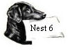nest 6