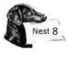 nest 8