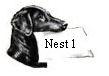 nest 1