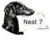 nest 7