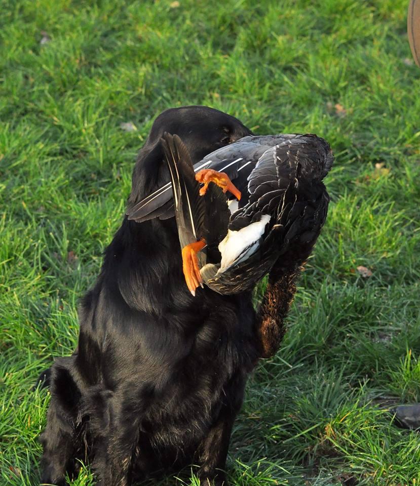 hunter zit eend