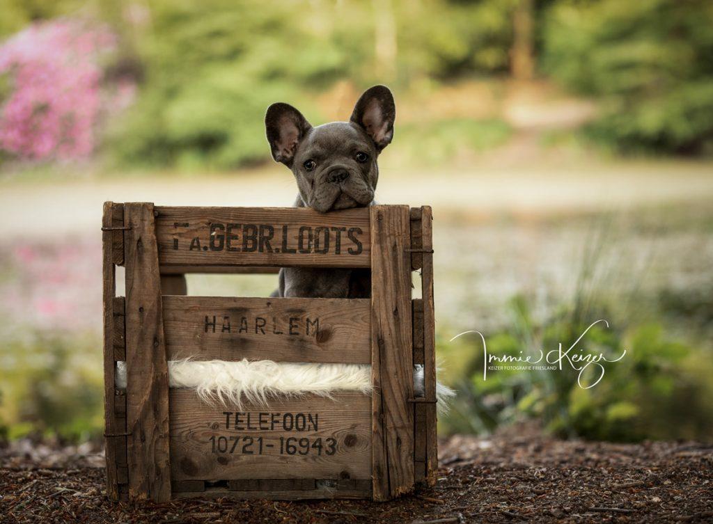 Pup in kistje