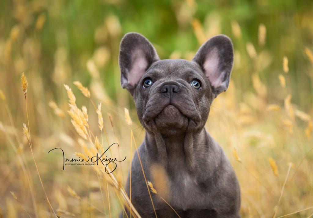 puppy foto Blue