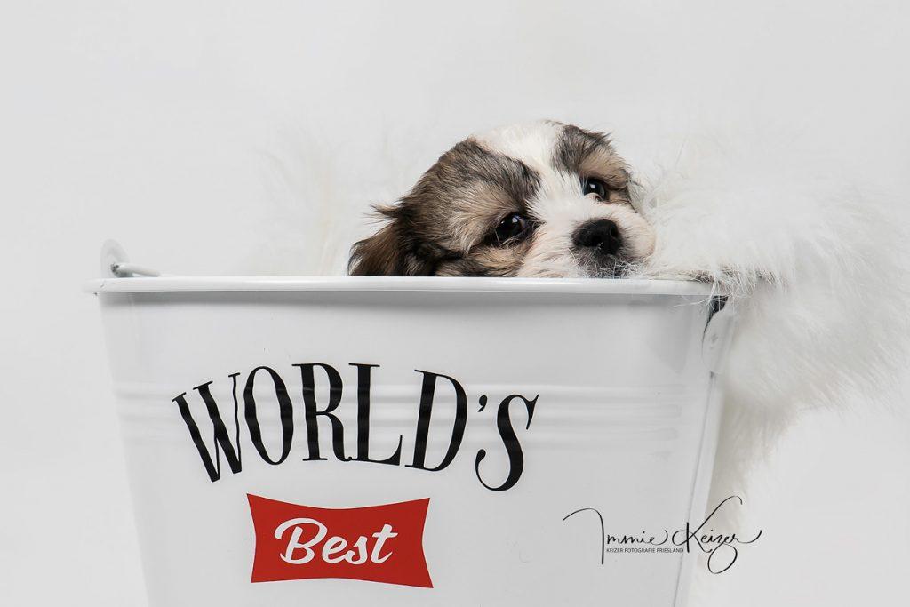 puppy foto keizer fotografie